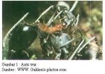 ants war